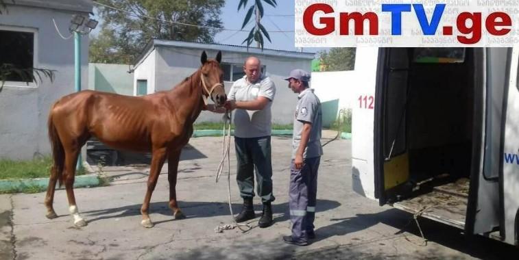 """თბილისში ცხენი """"დააპატიმრეს"""""""