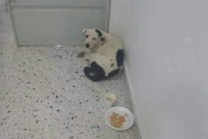 აეროპორტში მიტოვებული ძაღლი დარდისგან მოკვდა