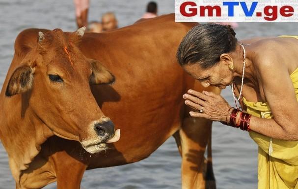 ინდოეთში პატიმრები ძროხებით თერაპიას გაივლიან