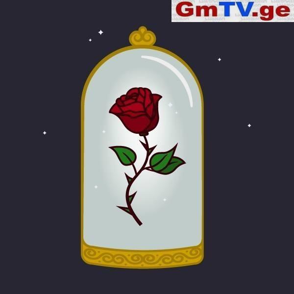 """Desert Flower – """"აჩუქე უდაბნოს ყვავილი არაფრის მთქმელი სიტყვების ნაცვლად"""""""