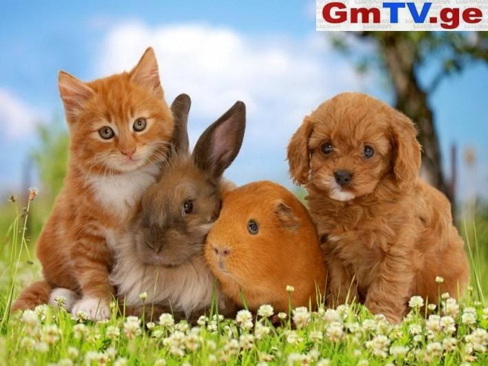 პარლამენტი შინაურ ცხოველთა კეთილდღეობის შესახებ სპეციალურ კანონს მიიღებს