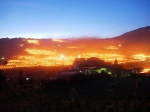 იტალიაში მევენახეებმა ზვრებში ცეცხლი აანთეს და ვაზი ყინვას გადაარჩინეს